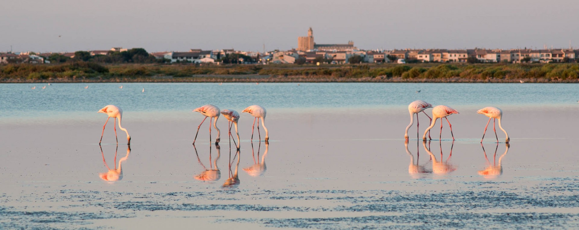 Luxury Short Breaks In The Camargue Kirker Holidays