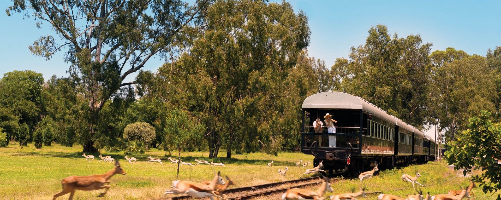 Кейптаун (3н) - поезд Rovos Rail (2н) - Йоханнесбург (1н) - Парк Крюгера (2н) - Панорамный путь (1н);